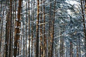 Renewable tree resources