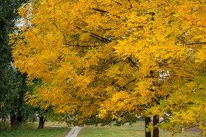 Autumn trees, yellow leaves on trees, autumn landscape, autumn p