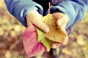 child with colorful autumn leafs