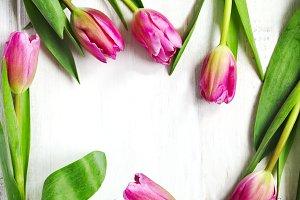 Spring tulips frame