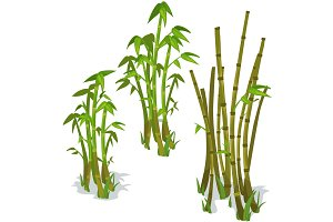 Vector bamboo isolated