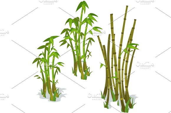 Vector bamboo isolated in Illustrations
