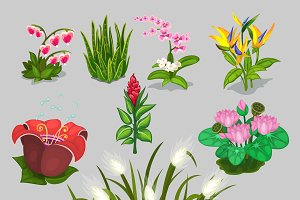 Big vector collection of different flowers