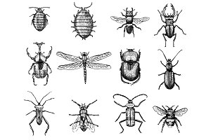 big set of insects bugs beetles and bees many species in vintage old hand drawn style engraved illustration woodcut