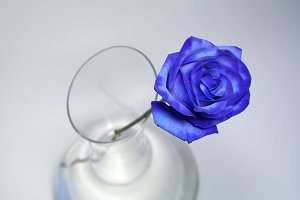Blue Rose in the decanter