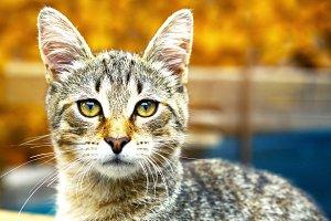 striped gray cat close up photo
