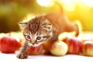 little kitten on the autumn background