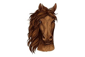 Horse head sketch of brown arabian racehorse