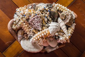 decorative sea shells and corals