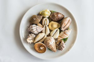 Different seashells in white plate