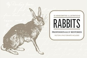15 Rabbit Illustrations