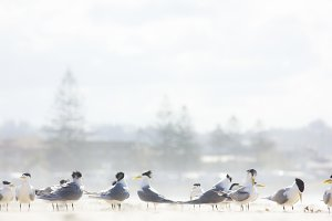 Seabirds Resting