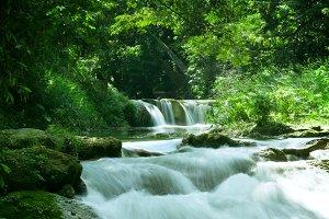 tropic river