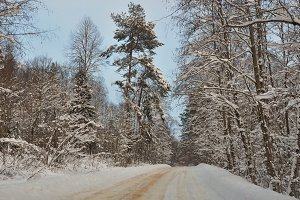 The road in the winter forest