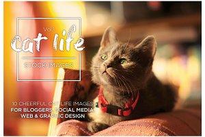 Cat Life Vol.1