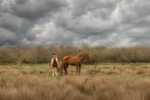 Three Horses Under Grey Clouds