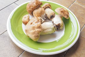 Porcino mushrooms