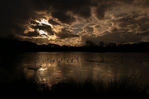 Richmond park- Pen ponds