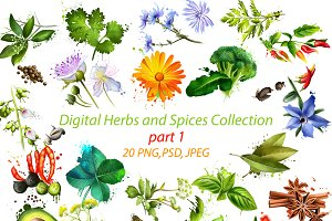 Digital Herbs and Spices Collection