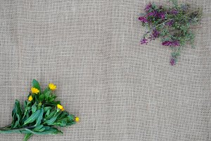 Wild spring herbs on a burlap