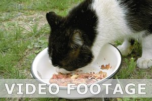 Cat eats meat outdoors on the green grass