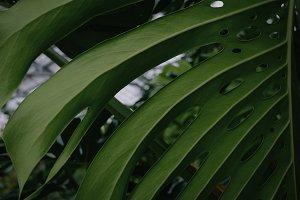 Botanicals #2