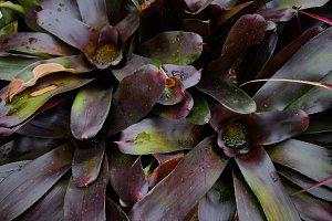 Botanicals #3