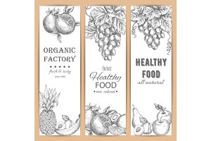 Garden fruit banners, agriculture sketch