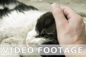 Petting caressing and fondling a cat