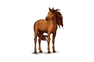 Sketch of horse standing, wild mustang or stallion