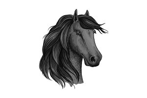 Sketched head of mustang or horse, stallion