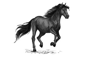 Sketched stallion gallop or horse abling