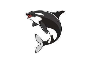 Grampus or orca, jumping killer whale