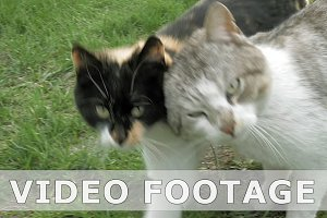 Two cats in love fondly tenderly touching walking