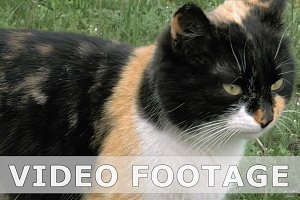Cat spits whines meows and hisses outdoors