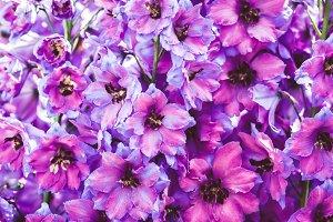 purple flowers. background