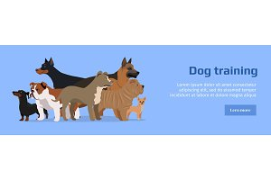 Professional Dog Training Service Banner.
