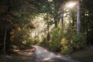 Sunrise through Woods