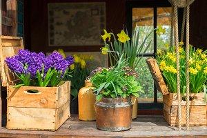 Spring flowers scenery