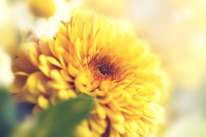 Closeup of beautiful flower, pastel
