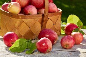 Basket of freshly harvested apples on wooden table.