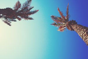 Palm tree with bright blue sky