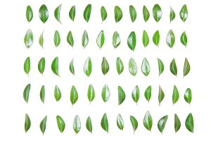 Green leaf in a row