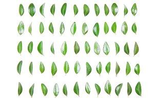 Green leaf in a row