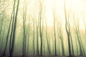 Fog in the dark forest.