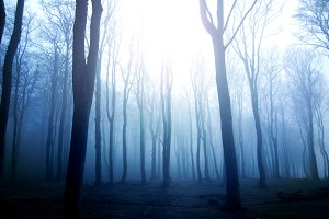 Fog in dark forest.