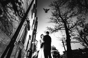 Pigeon flies over the happy couple