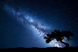 Tree against the Milky Way