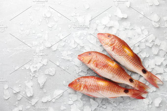 Red mullet fish on icy background food drink photos on for Red mullet fish