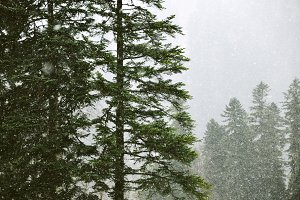 Beautiful landscapes of winter forest
